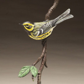 towensend_warbler-eugene_morelli-legacy_gallery-thumb